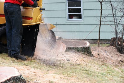 2021 Tree Stump Removal Cost Guide: How much does stump removal cost?